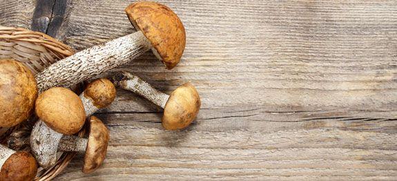 Come cucinare funghi leccini